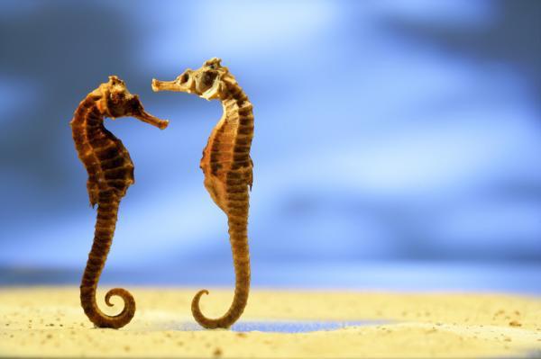 b5c66_seahorse1